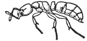 kwikkey_hymenoptera_2_800_380