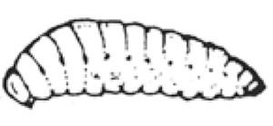 kwikkey_hymenoptera_4b
