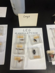 lab_practical_review_legs