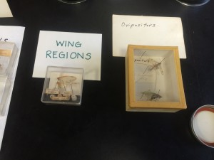 lab_practical_review_wing_regions